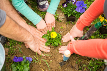 Close up of hands planting flower