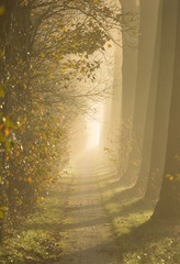 Sun shining on a lane of tree's on a foggy autumn morning.