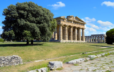 Stately oak trees juxtaposed imposing greek temple, Paestum