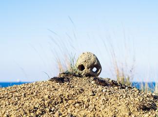 Skull on sand in desert