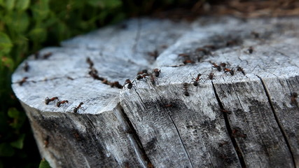 Ant colony working together
