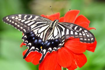 식물과 나비의 매크로세계