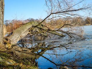 Schwanenteich Zwickau im Winter