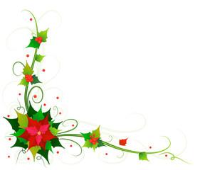 flowers of poinsettia