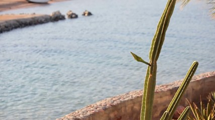 Cacti and succulents on water background