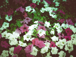 Retro look Flowers