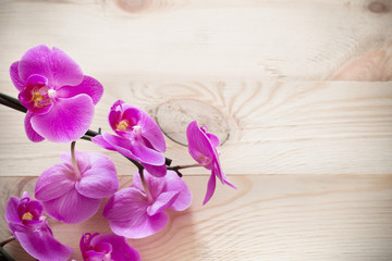 Pink orchid flowers on a wooden background