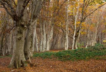 Riserva naturale del Monte San Vicino in autunno