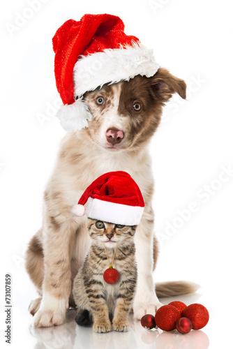 canvas print picture Hund und Katze an Weihnachten