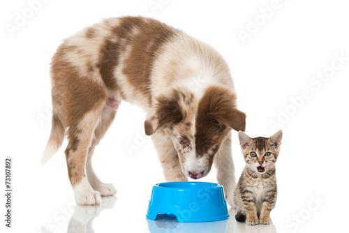 Foto op Aluminium Kat Hund und Katze mit Futternapf