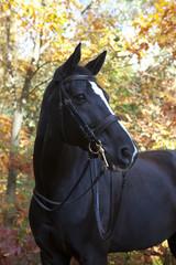 black brandenburger