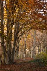 Autunno nella riserva naturale del Monte San Vicino, Marche
