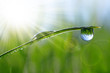 Leinwanddruck Bild - Fresh green grass with dew drops closeup. Natural background.