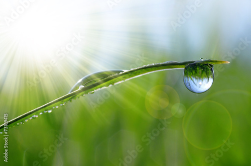 Leinwanddruck Bild Fresh green grass with dew drops closeup. Natural background.