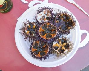 Fresh sea urchin.