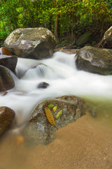 Leaves on the rock with Milky river background in the jungle