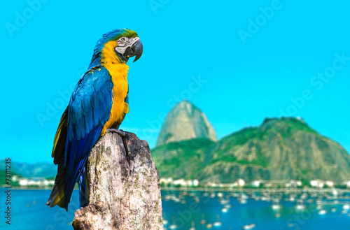 Papiers peints Perroquets Blue and Yellow Macaw in Rio de Janeiro, Brazil