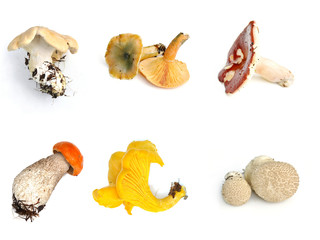 Different mushrooms on white background