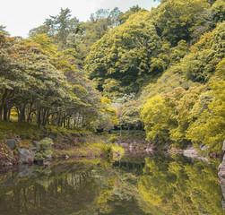 Autum seasonal Tree in Jeju Do , Korea.
