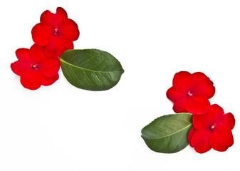 flores con espacio libre