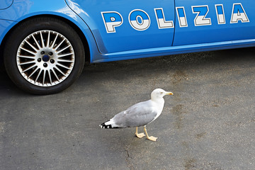 Police car on city and seagull