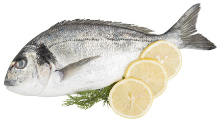 Bream with decoration of lemons and dill isolated