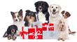 canvas print picture - Hundegruppe mit Geschenken