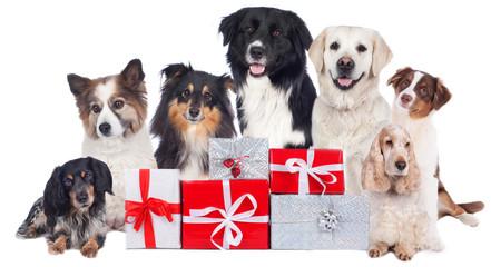 Hundegruppe mit Geschenken