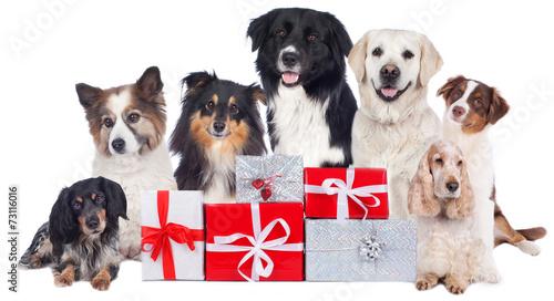 canvas print picture Hundegruppe mit Geschenken