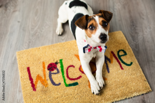Cute dog posing on the carpet - 73116832