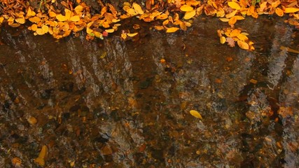 dry autumn leaf in stream