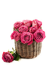 Bouquet of beautiful pink roses on white background.