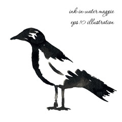 ink in water magpie, vector hand grawn illustration