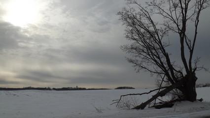 Frozen Bayside