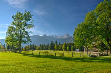 Alpine Meadow in Julian Alps