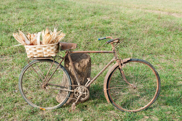 Old rusty and damaged bike, with a basket full of corncobs