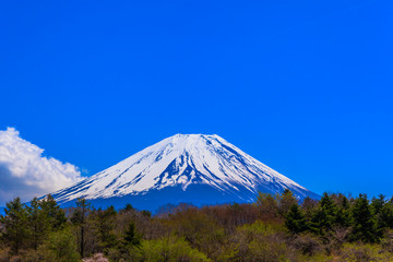 Green forest and Mount Fuji under the blue sky