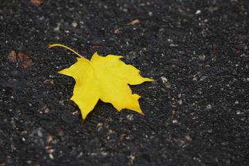 Autumn leaf on wet road