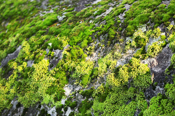 Green moss on large stone, close-up