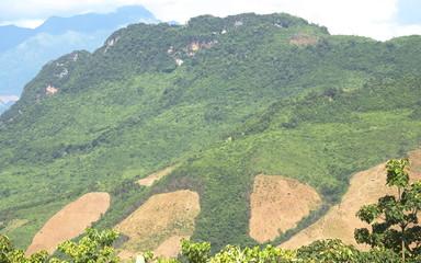Upland rice field