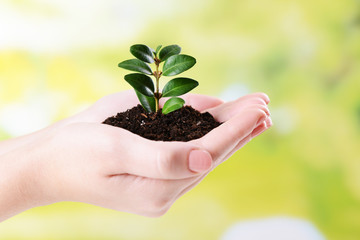 Plant in hands on bright background