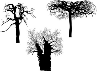 three bare tree silhouettes isolated on white