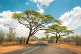 African landscape with empty road and trees in Zimbabwe - On the