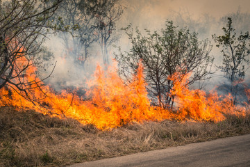 Bushfire burning at Kruger Park in South Africa