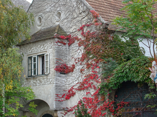 canvas print picture Fassade mit Wildem Wein