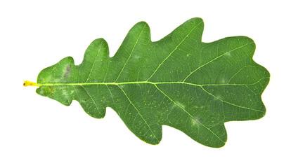 sheet from oak