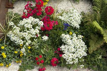Grabbepflanzung; Sommerblumen,