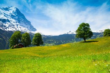 Summer nature landscape near Alps