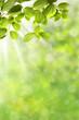 Leinwanddruck Bild - Frühling 326