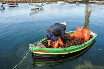 Ramasseur d'algues